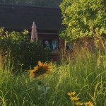 Garten in unserer Kolonie